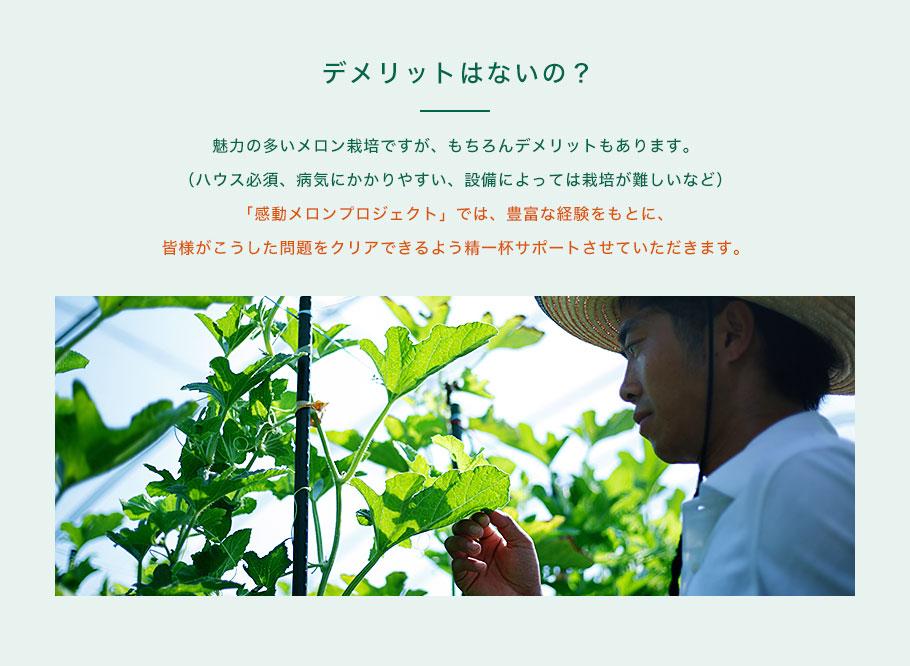 ■デメリットはないの?:魅力の多いメロン栽培ですが、もちろんデメリットもあります。(ハウス必須、病気にかかりやすい、設備によっては栽培が難しいなど)「感動メロンプロジェクト」では、豊富な経験をもとに、皆様がこうした問題をクリアできるよう精一杯サポートさせていただきます。